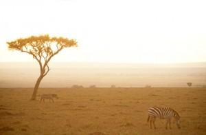 David Noyes leads Kilimanjaro trek for a cause